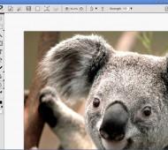 Piconion-Photo-Editor-App